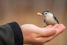 Handfeeding A White-breasted N...