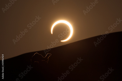 Obraz na plátně Annular solar eclipse in desert with a silhouette of a dromedary camel