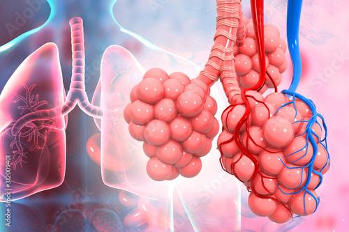 Vászonkép Lungs alveoli on medical background. 3d illustration