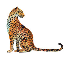 Hand Drawn Leopard Isolated On White Background. Stock Illustration Drawn By Gouache With A Wild Cat