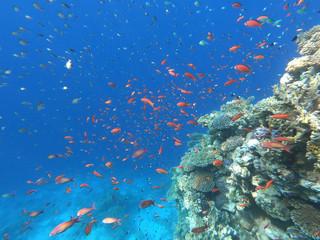 Fototapeta na wymiar Plenty of fish, underwater world