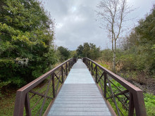Footbridge Across Wetland On W...