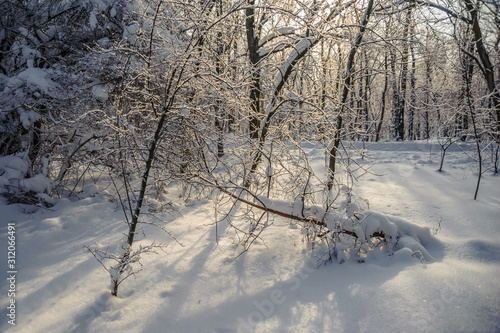Fotografie, Tablou  The shadow of snowy trees in the forest