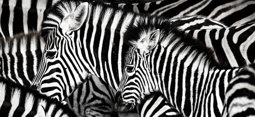 Fototapetabackground which the structure of hide of zebra is represented on