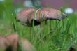 Pilz im Garten nahaufnahme