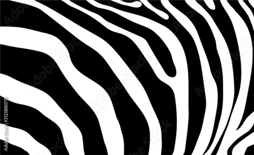 zebra stripes background  - 312088078