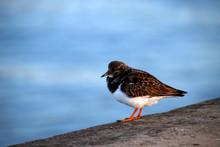 Sea Bird At The Shore