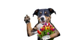 Valentine Dog With A Bouquet O...