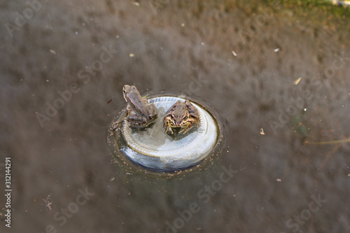 Photo Two frogs rest in a glass bottle submerged in a raft