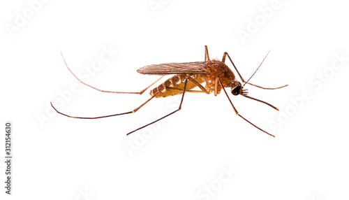 Photo Mosquito isolated on white background