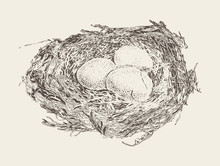Bird Nest Three Eggs Hand Drawn Vector Sketch
