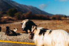 Goat On Crete