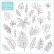 Hand sketched vector vintage tropical elements. Hand Drawn Botanical Tropical leaves. Set of plant elements. Vector Collection of Illustrations