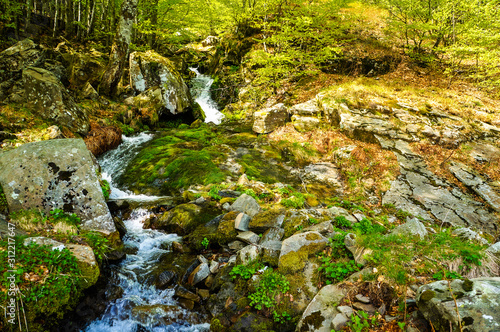 A stream in the forest in the Apennines in Italy Wallpaper Mural