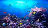 underwater, fish, ocean, sea, reef, coral, colourful, diving, scuba, ecosystem, fishing, life, beach, shark, shell, depths, ray, skate, water,   surface, environment, shellfish, starfish, aquatic, ani