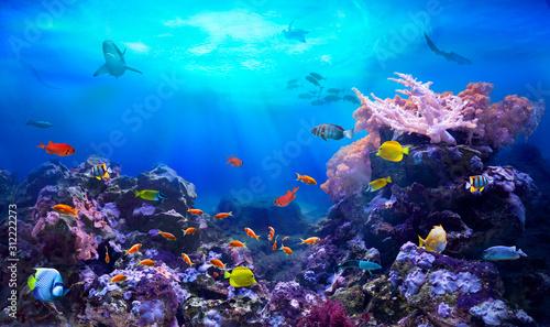 Valokuva underwater, fish, ocean, sea, reef, coral, colourful, diving, scuba, ecosystem,