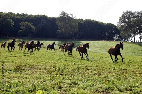 Photo troupeau chevaux au galop