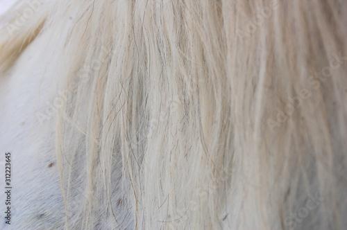 Fotografía  crins cheval
