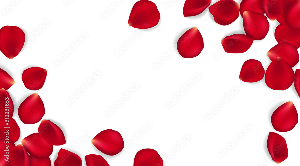 Fototapeta Rose petals on white ground. Vector illustration red rose petals background. Can be used Valentines day, mothers day and different holidays