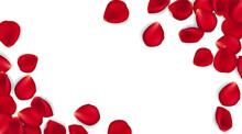 Rose Petals On White Ground. V...