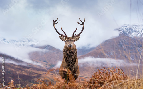 Monarch Of The Glen Wallpaper Mural