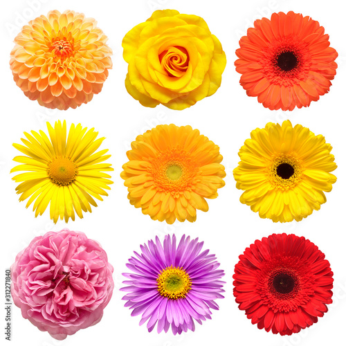 Fotografie, Obraz Flowers head collection of beautiful aster, rose, daisy, gerbera, chrysanthemum, dahlia, chamomile isolated on white background