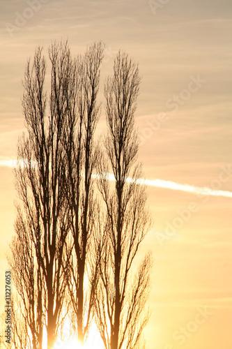Bäume im Herbst vor Sonnenuntergang, Abend, Sonne Wallpaper Mural