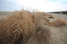 Dry Tumbleweed Tangled On Fence