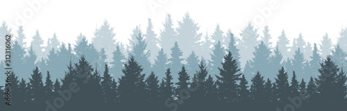 Coniferous winter forest background. Nature, landscape. Pine, spruce, christmas tree. Fog evergreen coniferous trees. Silhouette vector illustration - 312316062