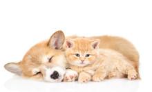 Pembroke Welsh Corgi Puppy Sle...