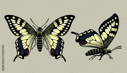 Two butterflies in vintage engraving style Tapéta, Fotótapéta