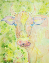 Colorful Cow In The Field. The...