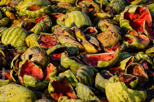 Heaps of rotting watermelons. Peel of melon. An abandoned field Canvas-taulu
