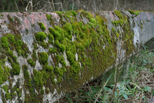 Moss On The Old Concrete Balus...
