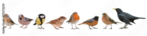 Fototapeta Collection of the most common European birds, isolated with white background