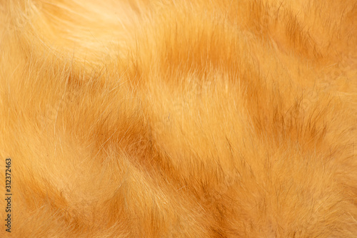 Red cat fur texture Fototapete