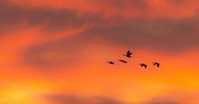 Flock Of Birds Flying In The S...