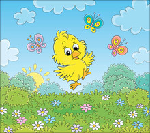 Cute Little Chick Dancing For ...