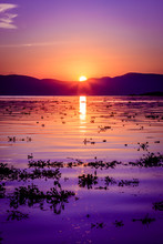 Deep Magestic Purple Sunset Reflecting Over A Rippled Lake Chapala In Ajijic Mexico
