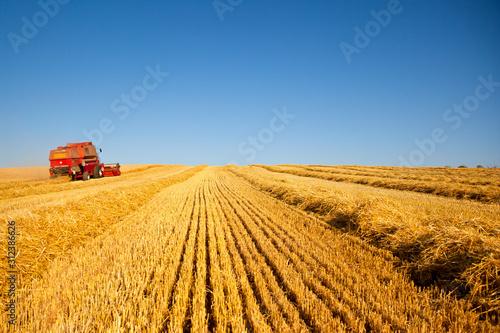 Moissonneuse au travail dans les champs de blé en été Tapéta, Fotótapéta