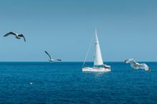 White Seagull Flies On A Sunn...