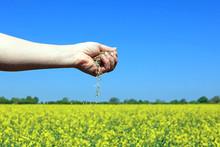 A Handful Of Seeds Being Relea...