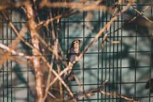 House Sparrow On Fence