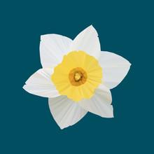 Polygonal Daffodil (Narcissus), Polygonal Flower, Isolated Vector Illustration