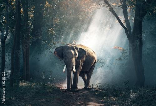 elephant-in-zoo