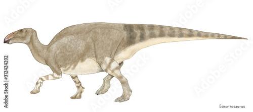 Cuadros en Lienzo エドモントサウルス 鳥脚類 白亜紀後期に生息した植物食の恐竜。全長は約13メートルであり、カモノハシ竜の仲間では最大級。カモノハシ竜の特徴である幅広い吻を持ち、