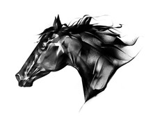Drawn Horse Portrait Side View On A White Background