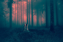 Old Gray Tree Stump Waiting For Night To Come In Dry Autumn Grassy Ground Of Cold Scary Foggy Forest Landscape Background - Magical Pink Red Sunset Light Of Spooky Woods Happy Halloween Card