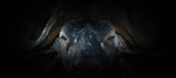 Fototapeta Zwierzęta - Buffalo portrait on a black background