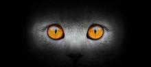Cat Portrait On A Black Backgr...